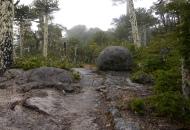 A gránit tömbök mállás közben legömbölyödnek (Nahuelbuta NP, Chile)
